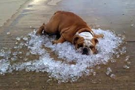 over-heat-dog